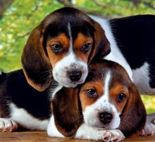 О характере знаменитостей расскажет порода их собаки
